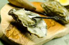 Raw oyster. Fresh raw oyster on the half shell with decorative fork Royalty Free Stock Photos