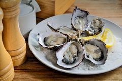 Raw Oyster. Raw Australian Oyster with salt dish Royalty Free Stock Image