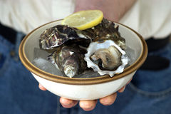 Raw oyster in a bowl with ice and lemon Royalty Free Stock Image