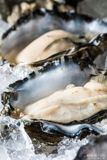 Raw Oyster in the half shell Stock Photo