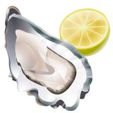 Raw oyster illustration Stock Images