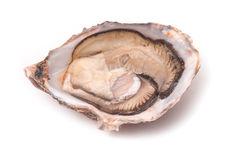 Raw oyster isolated on a white studio background. Stock Photo