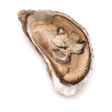 Raw oyster isolated on a white studio background. royalty free stock image