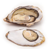 Raw oyster isolated on a white studio background. Royalty Free Stock Photo