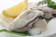 Raw oyster with lemon. No-shelled oysters on leaf with ice cube and lemon Royalty Free Stock Images