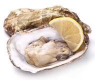 Raw oyster and lemon on a whte background. Stock Photo