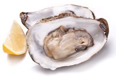 Raw oyster and lemon on a whte background. Royalty Free Stock Images