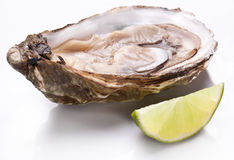 Raw oyster and lemon on a whte background. Royalty Free Stock Photos