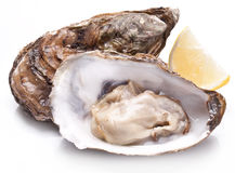 Raw oyster and lemon on a whte background. Raw oyster and lemon isolated on a whte background Royalty Free Stock Images