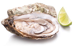 Raw oyster and lemon on a whte background. Stock Images