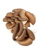 Raw Oyster Mushrooms Stock Images