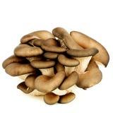 Raw Oyster Mushrooms Stock Photos