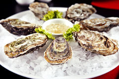 Close up of raw oyster on plate Royalty Free Stock Photos