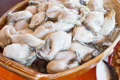 Raw oyster served with spice side dishes in Thailand Royalty Free Stock Photos