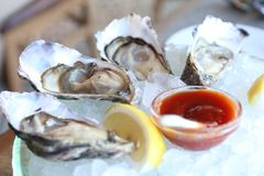 Raw Oyster Station in Restaurant. Oyster Station, Oysters served on ice and with a piece of lemon on the side, salt-water bivalve molluscs , from Africa Stock Photo