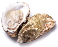 Raw oyster. Raw oyster on a white background Stock Image
