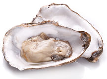 Raw oyster. Raw oyster on a white background Royalty Free Stock Image