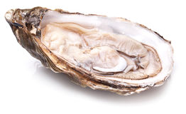 Raw oyster on a white. Stock Image