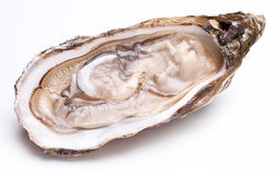 Raw oyster. Raw oyster on a white background Royalty Free Stock Photos