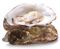 Raw oyster on a white background. Opened raw oyster on a white background Stock Images