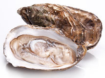 Raw oyster. Raw oyster on a whte background Stock Image