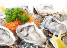 Raw oysters Stock Photography