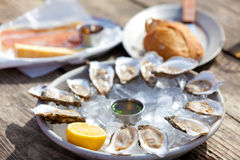 Raw oysters Stock Images