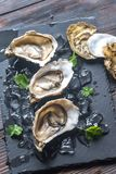 Raw oysters on the black stone board. Close up Stock Images