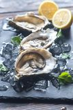 Raw oysters on the black stone board. Close up Royalty Free Stock Images