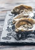 Raw oysters on the black stone board. Close up Royalty Free Stock Photos