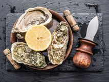 Raw oysters on the board. Raw oysters on the graphite board Royalty Free Stock Image