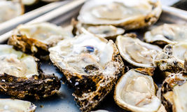 Raw Oysters Closeup Royalty Free Stock Photo
