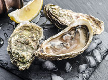 Raw oysters. Royalty Free Stock Photo