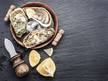 Raw oysters. Raw oysters on the graphite board Stock Photography