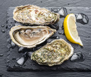 Raw oysters. Raw oysters on the graphite board Stock Image