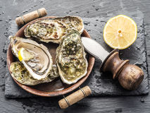 Raw oysters. Raw oysters on the graphite board Royalty Free Stock Images