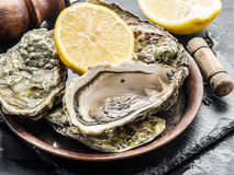 Raw oysters. Raw oysters on the graphite board Royalty Free Stock Image