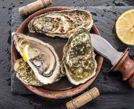 Raw oysters. Raw oysters on the graphite board Stock Images