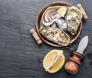 Raw oysters. Raw oysters on the graphite board Royalty Free Stock Photo