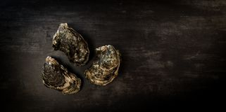 Raw oysters on the graphite board. France Stock Images