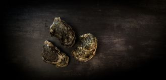 Raw oysters on the graphite board. France Stock Photos