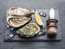 Raw oysters on the graphite board. Raw oysters with piece of lemon on the graphite board Royalty Free Stock Photo