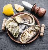 Raw oysters on the graphite board. Royalty Free Stock Image