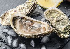 Raw oysters on the graphite board. Royalty Free Stock Photography
