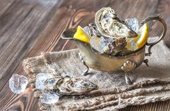 Raw oysters in the gravy boat. On the wooden background Royalty Free Stock Image