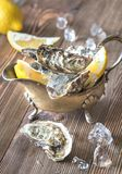 Raw oysters in the gravy boat. On the wooden table Royalty Free Stock Photography