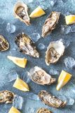 Raw oysters on the gray background. Top view Stock Photo