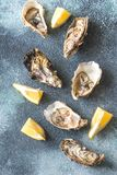 Raw oysters on the gray background. Top view Royalty Free Stock Images