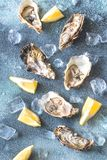 Raw oysters on the gray background. Top view Royalty Free Stock Photo