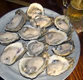 Raw Oysters on the Half Shell and Beer Stock Image
